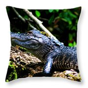 Resting Alligator  Throw Pillow