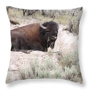 Resting Bison Throw Pillow