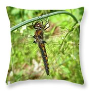 Resting Brown Dragonfly Throw Pillow