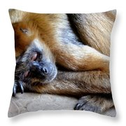 Resting Comfortably Throw Pillow