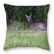 Resting Doe Throw Pillow