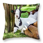 Resting Goats Throw Pillow