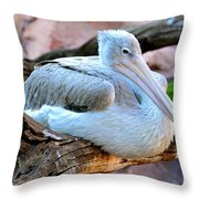 Resting Great White Pelican Throw Pillow