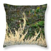 Resting In The Sun's Light Throw Pillow