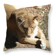 Resting Lioness Throw Pillow