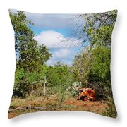 Resting Longhorn Bull - San Marcos Texas Hill Country Throw Pillow