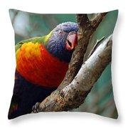 Resting Lorikeet Throw Pillow