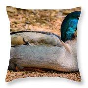 Resting Mallard Throw Pillow