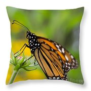 Resting Monarch Butterfly Throw Pillow