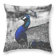 Resting Peacock Throw Pillow