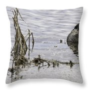 Resting Pied-billed Grebe Throw Pillow