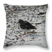 Resting Ruddy Throw Pillow