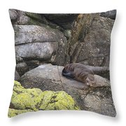 Resting Seal Throw Pillow