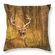 Resting White-tailed Deer Buck Throw Pillow