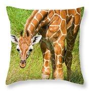 Reticulated Giraffe 6 Week Old Calf Throw Pillow