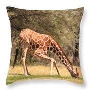 Reticulated Giraffe Drinking At Waterhole Kenya Throw Pillow