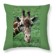 Reticulated Giraffe Throw Pillow
