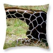 Reticulated Giraffe On Ground Throw Pillow