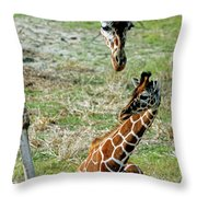 Reticulated Giraffe With Calf Throw Pillow