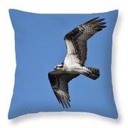 Returning Osprey Throw Pillow