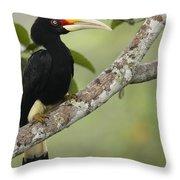 Rhinoceros Hornbill Female Sepilok Throw Pillow