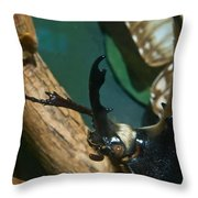 Rhinoseros Beetle Up Close And Personal Throw Pillow