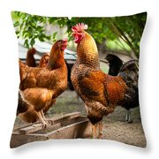 Rhode Island Red Chickens And Wooden Feeder  Throw Pillow