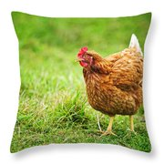 Rhode Island Red Chicken Throw Pillow