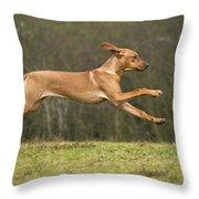 Rhodesian Ridgeback Throw Pillow