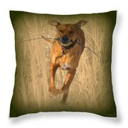 Rhodesian Ridgeback Throw Pillow