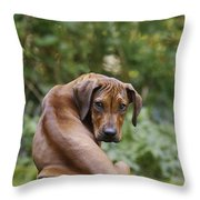 Rhodesian Ridgeback Puppy Throw Pillow