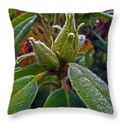 Rhododendron - Frosted Flowerheads Throw Pillow