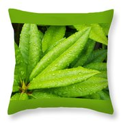 Rhododendron Leaves Throw Pillow