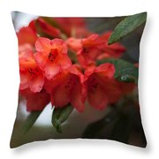 Rhododendron Sonata Throw Pillow