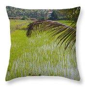 Rice Paddy Throw Pillow