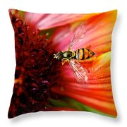 Rich Reward Throw Pillow