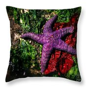 Right At Home Throw Pillow