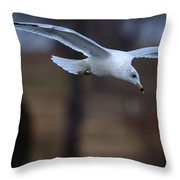 Ring-billed Gull Gliding Portraits 2 Throw Pillow