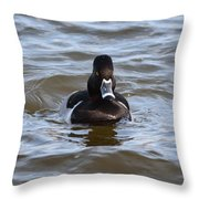Ring Neck Duck Throw Pillow