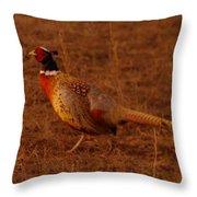 Ring Neck Pheasant  Throw Pillow