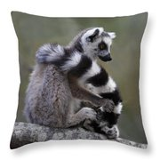 Ring-tailed Lemur Lemur Catta  Throw Pillow