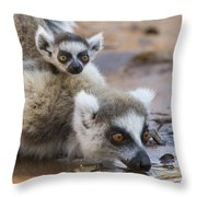 Ring-tailed Lemur Mother Drinking Throw Pillow