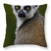 Ring-tailed Lemur Portrait Madagascar Throw Pillow