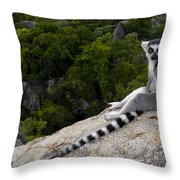 Ring-tailed Lemur Resting Madagascar Throw Pillow