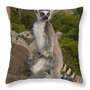 Ring-tailed Lemur Standing Madagascar Throw Pillow