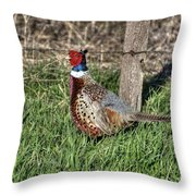 Ringneck By A Fence Post Throw Pillow