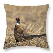 Ringneck Pheasant Rooster Throw Pillow