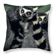 Ringtailed Lemurs Portrait Endangered Wildlife Throw Pillow