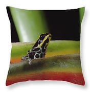 Rio Madeira Poison Frog Amazonia Ecuador Throw Pillow
