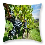 Ripe Grapes Right Before Harvest In The Summer Sun Throw Pillow